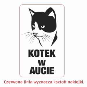 kotek w aucie