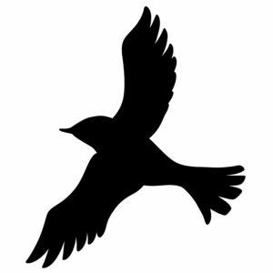 ptak 1