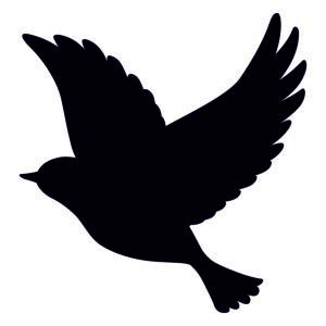 ptak 3