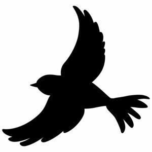 ptak 4