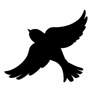 ptak 5
