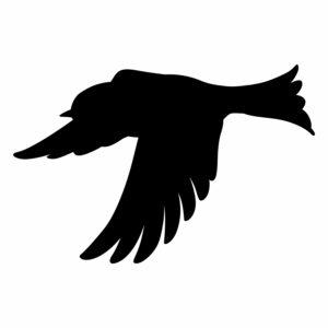 ptak 6