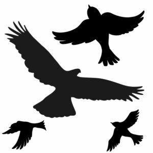 Ptaki odstraszające - naklejki